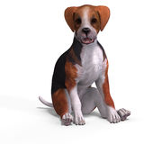 Cute puppy beagle Stock Photography