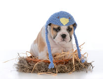Cute puppy in a birds nest Stock Images