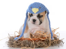 Cute puppy in a birds nest Royalty Free Stock Image
