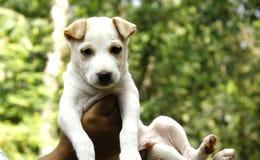 Cute puppy blurred background