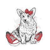 Cute puppy with bows and sneakers in polka dots. Vector illustration for a postcard or a poster, print for clothes. Pedigree dog. Royalty Free Stock Photos