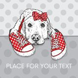 Cute puppy with bows and sneakers in polka dots. Vector illustration for a postcard or a poster, print for clothes. Pedigree dog. Stock Image