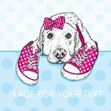 Cute puppy with bows and sneakers in polka dots. Vector illustration for a postcard or a poster, print for clothes. Pedigree dog. Stock Images