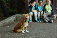 Cute puppy with boys looking on Stock Photo