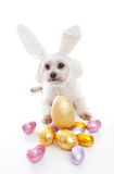 Cute puppy with bunny ears easter eggs Royalty Free Stock Photos