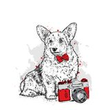 A cute puppy and a camera. Vector illustration for a postcard or a poster, print for clothes. Pedigree dog. Welsh Corgi. Stock Image