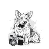 A cute puppy and a camera. Vector illustration for a postcard or a poster, print for clothes. Pedigree dog. Welsh Corgi. Stock Photo