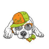 Cute puppy in a cap and glasses. Vector illustration for a postcard or a poster, print for clothes. Pedigree dog. Labrador. Royalty Free Stock Photo