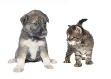 Cute puppy and  cat Royalty Free Stock Photography