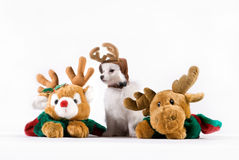 Cute Puppy Christmas. A cute puppy arranged on white background for Christmas cards Stock Photo