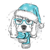 Cute puppy in a Christmas hat and scarf. Vector illustration. Beagle. New Year's and Christmas Stock Images