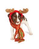 Cute Puppy Christmas Reindeer Royalty Free Stock Photos