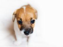 Cute puppy close up Stock Photo