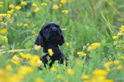 Cute puppy Stock Photography