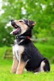 Cute puppy crossbreed dog Stock Images