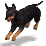Cute puppy doberman Stock Photo