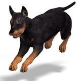 Cute puppy doberman stock photo