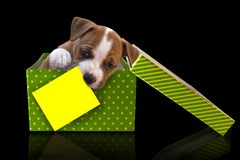 Cute puppy dog  in green gift box with lid and yellow paper card for a congratulation test on a black background American Staffor. Cute puppy, get out of a green Stock Photos