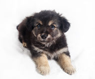 Cute puppy dog Royalty Free Stock Photo