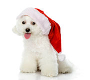 Cute puppy dog in red christmas Santa hat,. Isolated on white Royalty Free Stock Photography