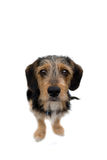 Cute Puppy Dog Sitting stock photos