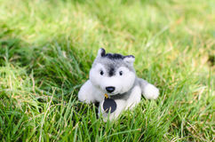Cute puppy doll on green grass outdoor. Stock Photo