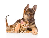 Cute puppy embracing little kitten. isolated on white background Stock Photography