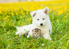 Cute puppy embracing tabby kitten on a dandelion field stock photography