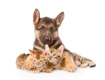 Cute puppy embracing two little kittens. isolated on white Stock Photography