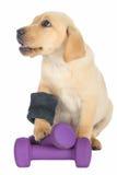 Cute Puppy Exercise Concept Royalty Free Stock Photos