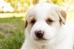 Cute Puppy Facing Camera Stock Photos