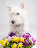 Cute Puppy with flowers Stock Photography