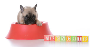 Cute puppy in a food bowl Stock Images