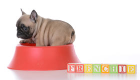 Cute puppy in a food bowl Stock Photography