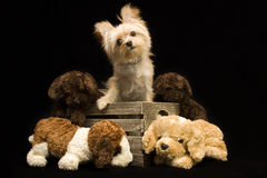 Cute Puppy and Friends Stock Image