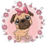 Cute puppy girl with flowers on a pink background Royalty Free Stock Photography