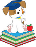 Cute Puppy Graduate Royalty Free Stock Images