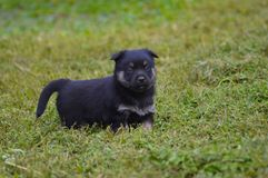 Cute Puppy on the Grass stock images