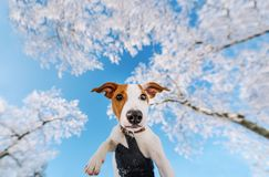 Cute puppy in hands, against the background of winter blue sky stock image