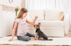 Cute puppy and happy young girl. Playing in the living room royalty free stock photography