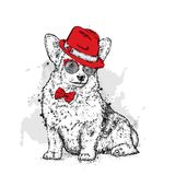 A cute puppy with a hat and glasses. Vector illustration for a postcard or a poster, print for clothes. Pedigree dog. Welsh Corgi. Stock Image