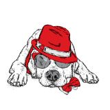 A cute puppy with a hat and glasses. Vector illustration for a postcard or a poster, print for clothes. Pedigree dog. Labrador. Royalty Free Stock Images