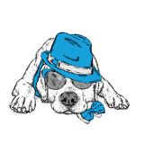 A cute puppy with a hat and glasses. Vector illustration for a postcard or a poster, print for clothes. Pedigree dog. Labrador. Stock Image