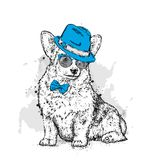 A cute puppy with a hat and glasses. Vector illustration for a postcard or a poster, print for clothes. Pedigree dog. Welsh Corgi. Stock Photography