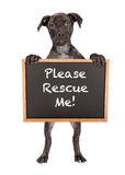 Cute Puppy Holding Rescue Me Sign Stock Images