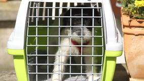 Cute puppy in Kennel stock video footage