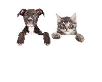 Cute Puppy And Kitten Hanging Over White Banner. Cute puppy and kitten with paws hanging over a blank sign with room for text stock photos