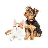 Cute Puppy and Kitten Sitting to Side Stock Photography