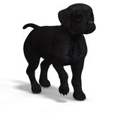 Cute puppy labrador Royalty Free Stock Photos