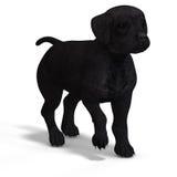Cute puppy labrador Royalty Free Stock Photos
